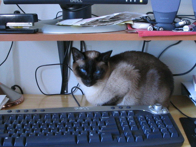 Zoe at the keyboard